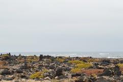 Fjärd som är full av vulkaniska stenar nära dyerna i Corralejo royaltyfri fotografi