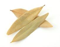 fjärd torkade leaves Arkivfoto