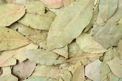 fjärd torkade leaves Royaltyfri Foto