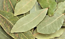 fjärd torkade leaves Arkivbild