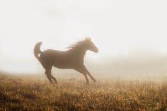 Fjärdedelhästspring i dimma Arkivfoto