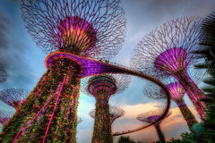 fjärden arbeta i trädgården singapore Arkivbilder