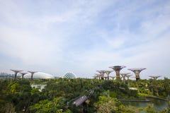 fjärden arbeta i trädgården singapore Arkivbild
