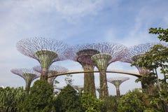 fjärden arbeta i trädgården singapore Fotografering för Bildbyråer