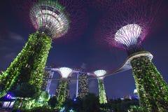 fjärden arbeta i trädgården singapore Royaltyfri Foto