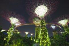 fjärden arbeta i trädgården singapore Arkivfoton