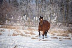Fjärdhäst på snön royaltyfri foto