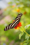fjäril arkivfoto