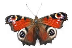 fjäril arkivbild