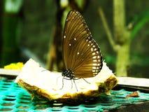 Fjäril royaltyfria foton