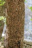 Fjäril anhydrous Kunskap av naturen Till och med ögonen av naturen arkivbild