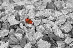 Fjäril av hopp arkivbilder