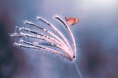 Fjäril djur, kryp, natur, makro, indonesia, royaltyfri fotografi
