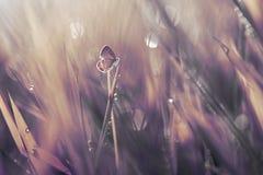 Fjäril djur, makro, royaltyfria foton