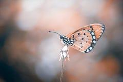 Fjäril djur, makro, bokeh, kryp, natur, royaltyfria foton