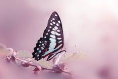 Fjäril djur, makro, bokeh, kryp, natur, arkivfoton