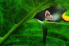 Fjäril djur, makro, bokeh, kryp, natur, fotografering för bildbyråer