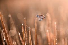Fjäril djur, makro, bokeh, kryp, natur, arkivbilder