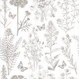 Fjäril för flora för vår för stålgrå färger Royaltyfria Bilder