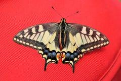 Fjäril för fotografi för naturkrypmakro arkivfoton