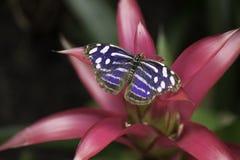 Fjäril för tjänstledigheter för gräsplan för vår för blommalilablått arkivbilder