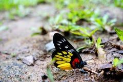 Fjäril, härliga och färgrika kryp Arkivfoton