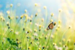 Fjäril i äng Fotografering för Bildbyråer