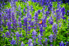 Fjäril i blommafälten Royaltyfri Fotografi