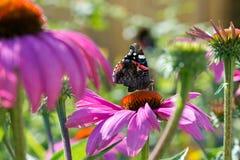Fjäril i blommaträdgård Arkivfoto