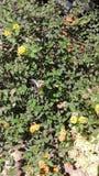 Fjäril i buske Royaltyfri Foto