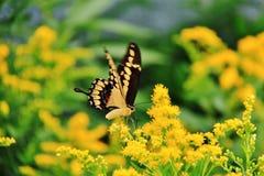 Fjäril i den Assiniboine zoo, Winnipeg, Manitoba fotografering för bildbyråer