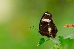 Fjäril i Dierenpark Emmen med en grön bakgrund royaltyfri foto