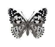 Fjäril i grå tatoostil som isoleras på vit bakgrund också vektor för coreldrawillustration Royaltyfri Fotografi