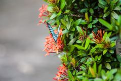 Fjäril i natur Royaltyfria Foton