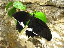 Fjäril i natur Arkivfoton