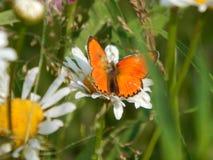 Fjäril i natur Arkivfoto
