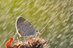 Fjäril i regnet Royaltyfri Bild