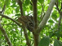 Fjäril i skogen i Costa Rica arkivfoton