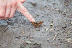 Fjäril i smutsen Royaltyfri Fotografi