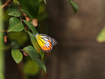 Fjäril i sommar royaltyfri foto