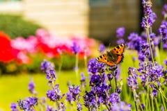 Fjäril i trädgård Arkivbild