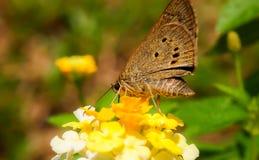 Fjäril i trädgård Royaltyfri Bild