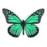 fjäril isolerad monarkwhite royaltyfri fotografi