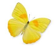 fjäril isolerad vit yellow Arkivbild