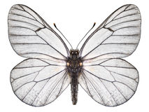 fjäril isolerad white Royaltyfri Foto