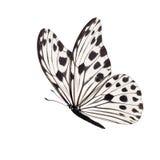 fjäril isolerad white royaltyfri fotografi