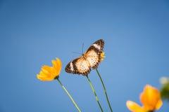 Fjäril med blomman Royaltyfri Bild