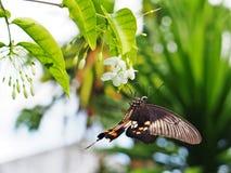 Fjäril med blomman Arkivfoto
