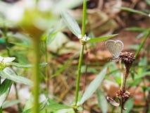 Fjäril med blomman Royaltyfria Foton