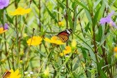 Fjäril med blommor fotografering för bildbyråer